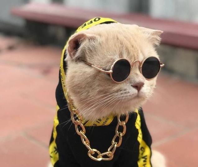 Кот стал самым очаровательным продавцом во Вьетнаме