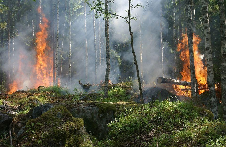 Особый противопожарный режим ввели натерритории Оренбургской области